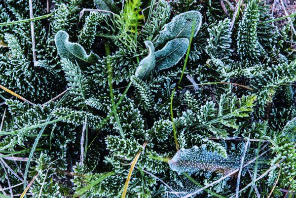 Wintergrün - »Gärten auf Sylt« von Ulrich Timm, Foto: Ferdinand Graf Luckner, Prestel Verlag